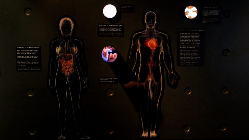 cancer exhibition by stereoscopica - rosa hernandez